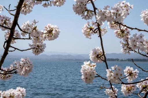 풍경 소재 화창한 날 가이즈 오 사키의 아름다운 벚꽃
