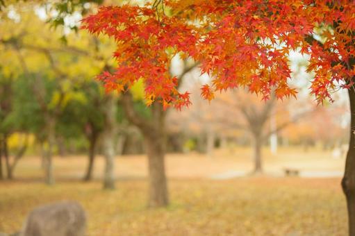 Fall scenery 10