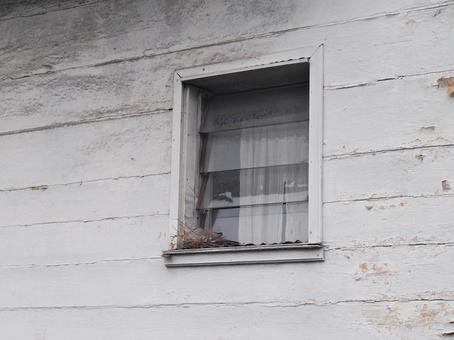 靠窗的塞舌爾鳥巢