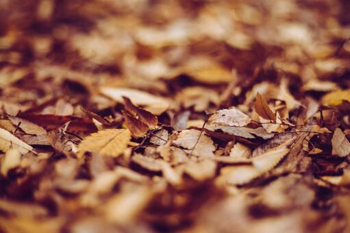 葉子下落的葉子死葉子圖像