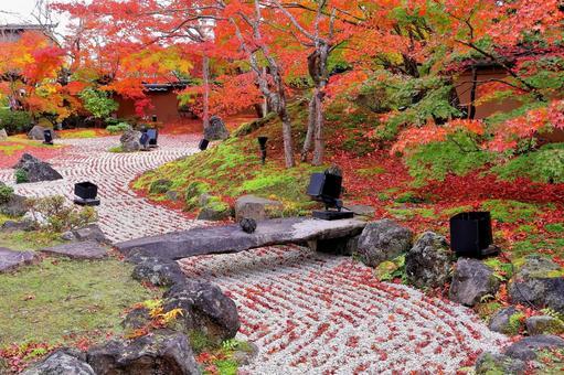 日本花園的秋葉