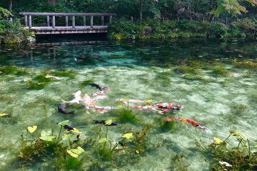 모네의 연못 _4