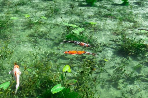 통칭 모네의 연못