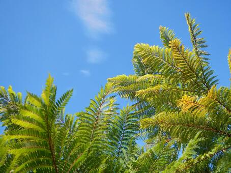 陽光和蕨類植物