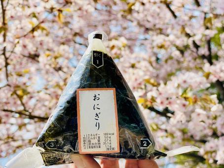 벚꽃의 앞에 편의점 주먹밥