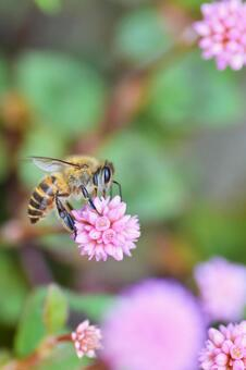 Flower of beetle basketball and bee honey beeswax bee