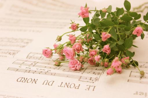 Pink Flower 4