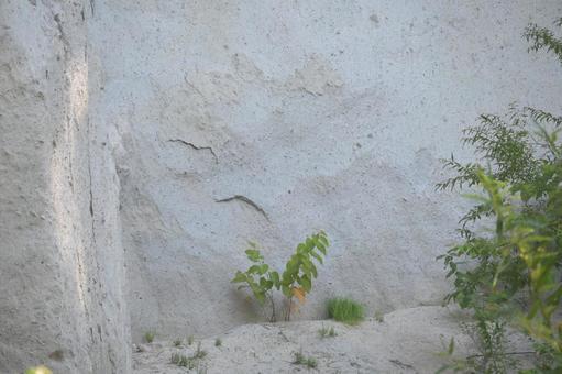 白色岩石背景和植被