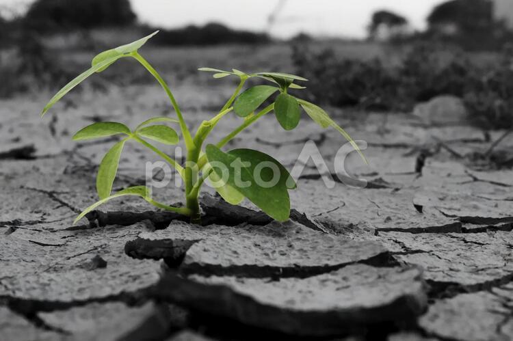 乾いた土地から芽を出した植物の写真