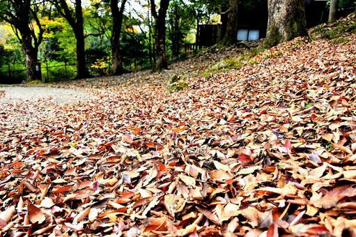 Scenery of fallen leaves