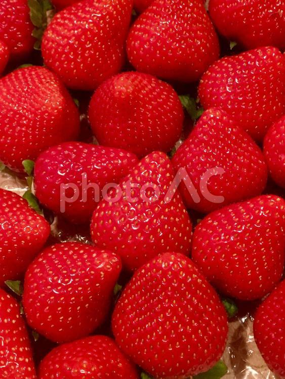 イチゴがいっぱいの写真