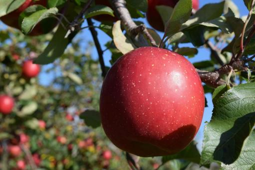 A bright red apple