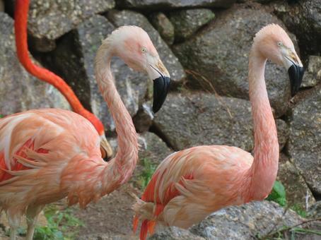 Flamingo rain