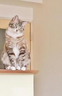 고양이 고양이 고양이 응시 고양이