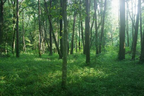Trees_Forest_66
