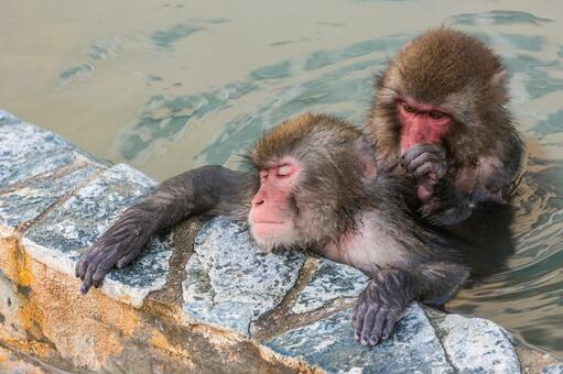 Monkey and hot spring