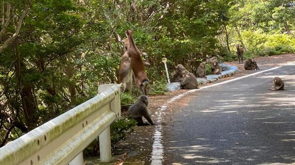 Monkeys watching a deer in a fight