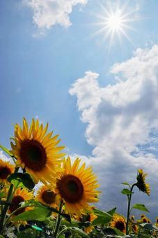 夏日風景向日葵