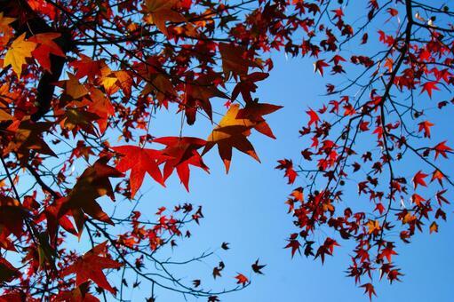 Autumn leaves and autumn sky