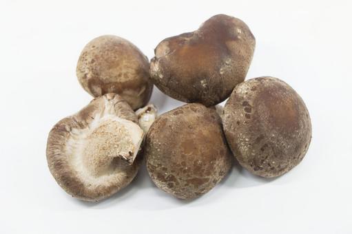 文田 표고 버섯