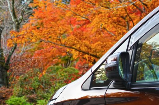 Autumn leaves and drive 2