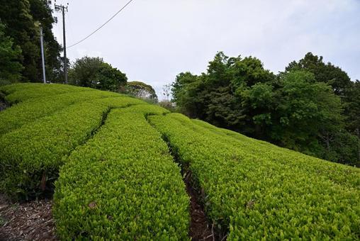 산의 경사면을 따라 펼쳐지는 장대하고 아름다운 차밭