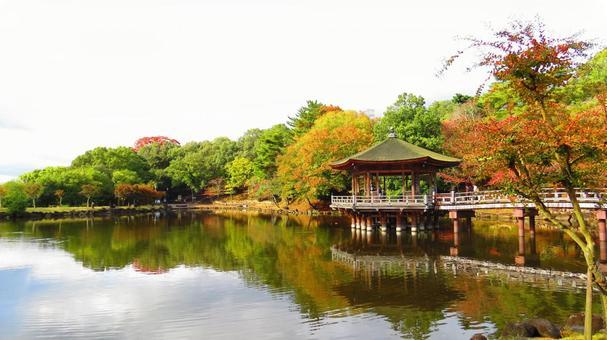 浮見堂 (나라 공원의 단풍)