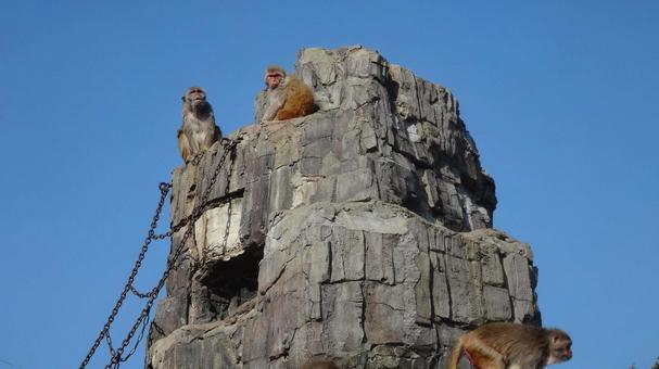猿山的猴子