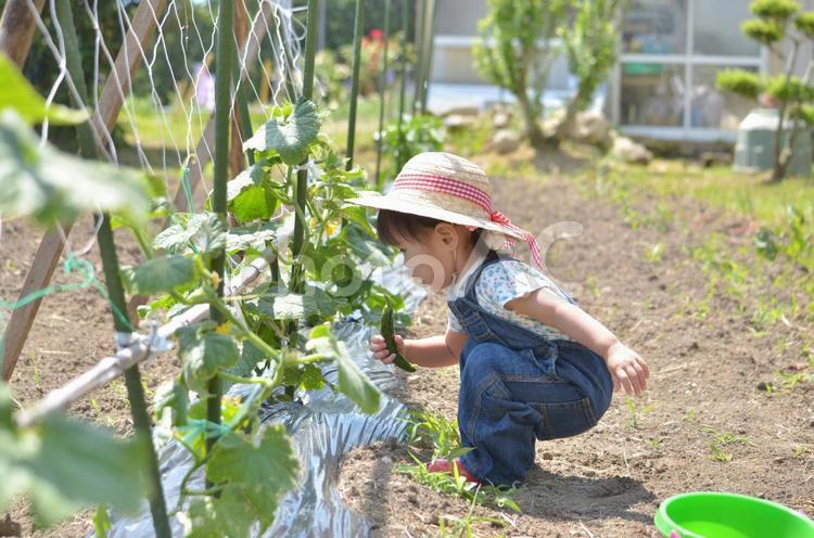 収穫ガールの写真