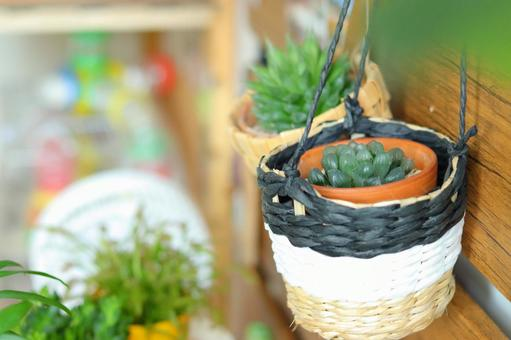 Fashionable succulents