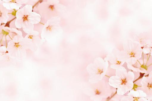 Sakura's side frame