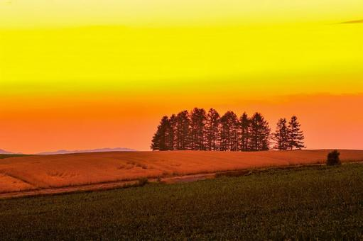 Hokkaido! Biei, patchwork yellowtail