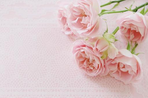 溫柔的玫瑰