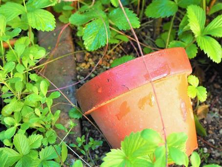 Flowerpot left in the garden