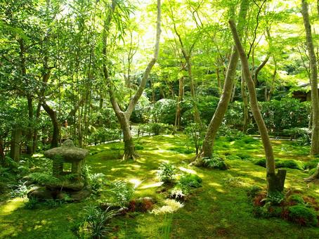 Moss Temple in Kyoto