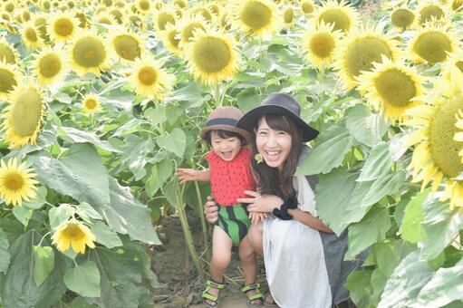 Sunflower and parent and child 2