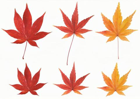 Clipping material Leaf set of autumn leaves 1