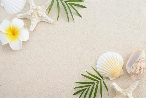 Fine sand shell summer image