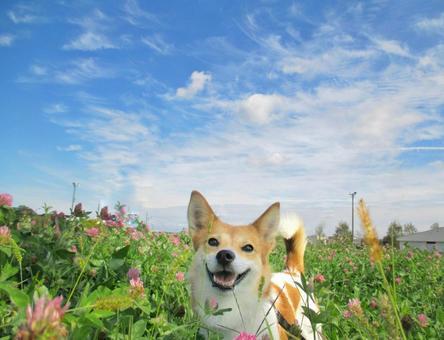 초원에 미소 기분 개