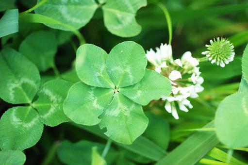 Five leaf clover