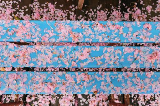 Cherry blossoms scattered on the bench