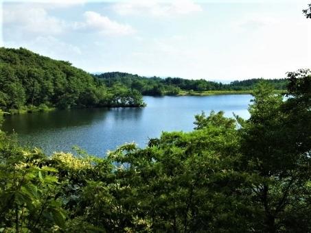 뿌리 위에 호수