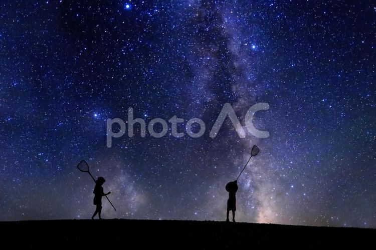 虫取りで星を取る子供達の写真