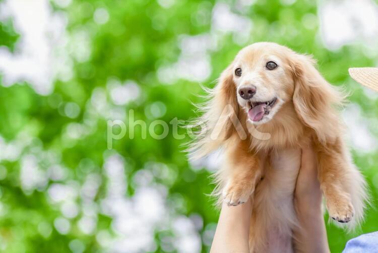 散歩する犬の写真