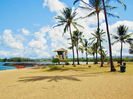 Hawaiian sandy beaches and palm trees