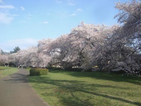 Nogawa公园