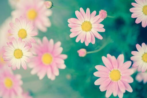 Fantastic flowers 79