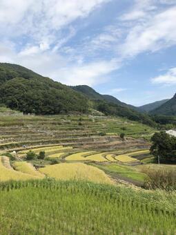 Senmaida in Nakayama