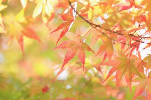 秋天的落葉