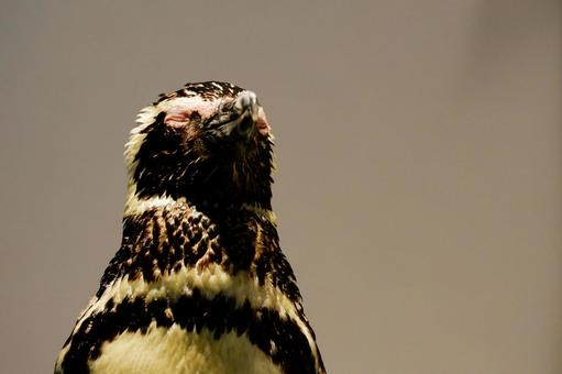 Pensive penguins
